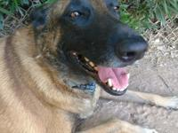 **Joey is part of a bonded pair and will only be