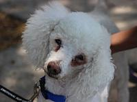 Joey's story Joey is a senior boy and one sweet guy. He