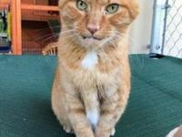 Joey's story Breed: Domestic shorthair (orange) Age: 12