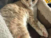 Joey's story Joey is a playful clown. he has an orange