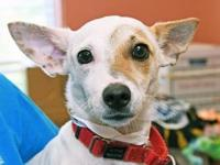 Joey's story Looking for a sweet little friend? Come