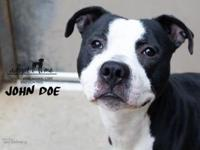 John Doe's story John Doe came in as a stray and is