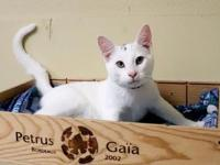 My story Come visit me at Orlando Cat Cafe. I'm a
