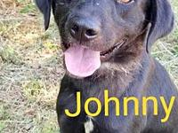 Johnny Rocket's story You can fill out an adoption