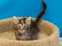 JoJo's story Adoption fee for cats is $65.00 which