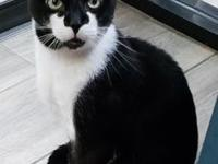 JoJo's story A handsome black and white kitty boy with