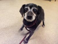 Jojo is a Puggle mix that is about 11 years old. She