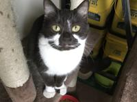 Joker-ette Age: 2-years Status: Available for Adoption