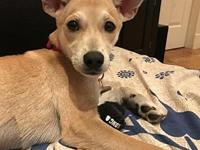Jolene's story Foster update: Jolene is a very sweet