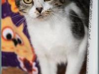 JOLENE's story $97.50 FEE INCLUDES: neutering/spaying,