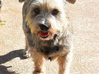 My story Jolie is a pretty Silky Terrier who finds