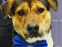 Jonathan's story I am good with other dogs & love