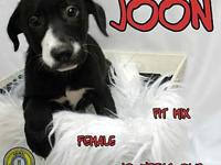 Joon's story You can fill out an adoption application