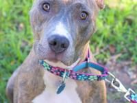 Jordan is a female, year old, brindle American
