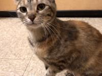 Jorden is a female Torti, that is approx 2 years old.
