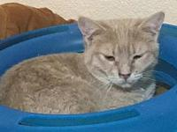Jordy's story Hello! My name is Jordy. I am a male DSH