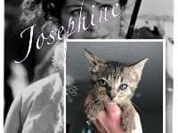 Josephine Earp's story   Zoi's Animal Rescue Save a