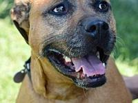 My story Woof! My name is Josie.  I am a sweet, 2
