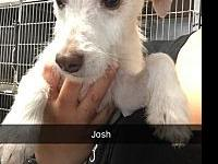 Josh's story At Wags and Whisker's Pet Rescue: