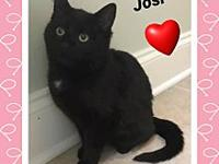 Josi's story ** Contact info: email