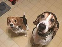 Josie and Cooper URGENT's story Please HELP This is