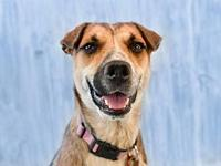 Josie's story Meet Josie. This gorgeous gal is looking