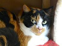 Josie's story Josie's person adopted her as a kitten in