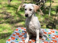 Josie's story Very sweet playful puppy is good with
