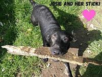Josie's story This beautiful girl is Josie. Josie is a