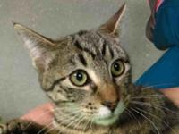 JOY's story Come meet Joy and Vito! Joy is an 8 month