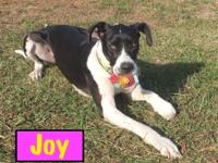Meet Joy!! Joy is a 1 year old (DOB September 2016)