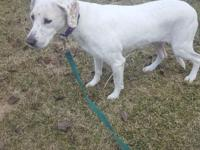 Joy is a very sweet girl who has had a rough life.  She