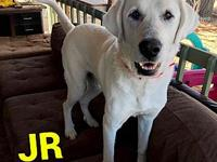 JR's story JR is a 3-5 year old, male, Great Pyrenees