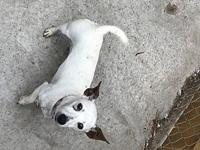 JRT Jella Rae's story Please contact Monica R Larner