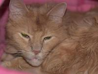 Jube's story Jube is a very handsome orange cat that