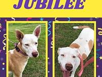 Jubilee's story Jubilee came to rescue very starved and