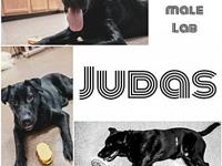 Judas's story You can fill out an adoption application