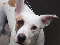 Judu's story Judu is a sweet girl hoping to find her