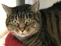 Judy is a outgoing Tabby. She LOVES to get full body