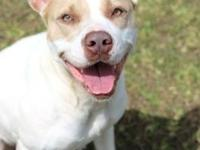Julia's story I'm Julia, I am a 4 year old pitbull mix