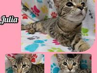 Julia's story Our adoption fee is 80.00 which covers