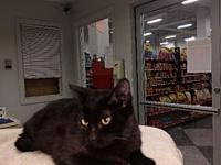 Julian's story Sweet little black panther loves laps