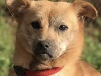 Julien was rescued from a slaugterhouse in China and