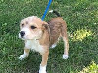 Juliet's story I am a 12 week old mixed puppy. My breed