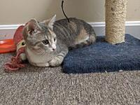 My story Juliet is a playful, sweet kitten who can be a