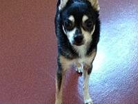 "Julio's story JULIO 6 year old male ""SWEETHEART"", who"