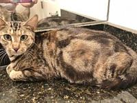 Julyanna's story Julyanna is a beautiful 2 yr old Tabby