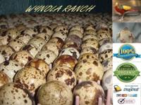 100 + Cotournix quail $0.50 cents / each 2 days old. We