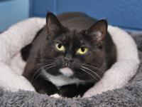 June is a sweet and loving 3-year-old kitty who came to
