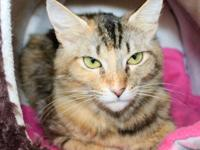 June Bug is a precious cat who was found wandering